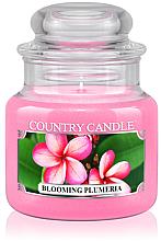 Düfte, Parfümerie und Kosmetik Duftkerze im Glas Blooming Plumeria - Country Candle Blooming Plumeria