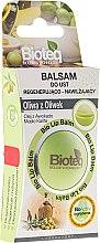 Düfte, Parfümerie und Kosmetik Regenerierender und feuchtigkeitsspendender Lippenbalsam mit Olivenöl - Bioteq Bio Lip Balm Regenerative and Moisturizing Olive Oil